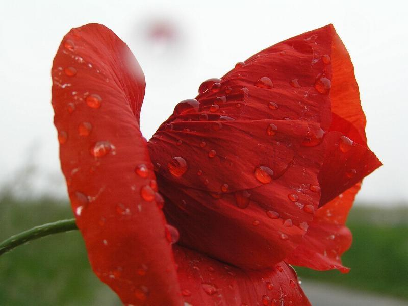 De Kleur Rood : La maison victor nl ek fever diy in de kleuren van de rode duivels